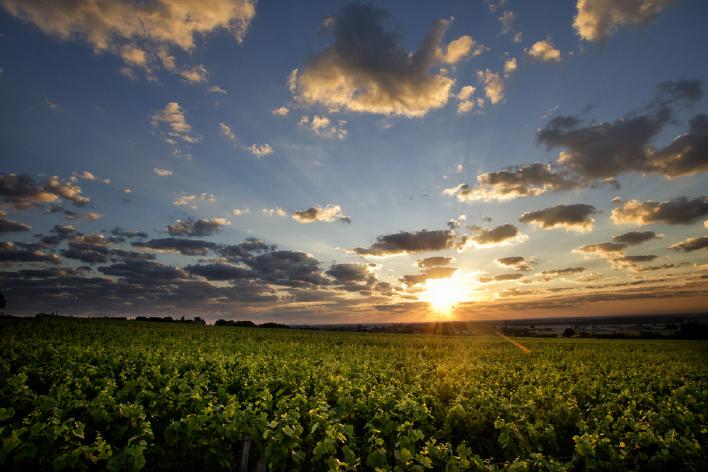 Couché de soleil sur les vignes
