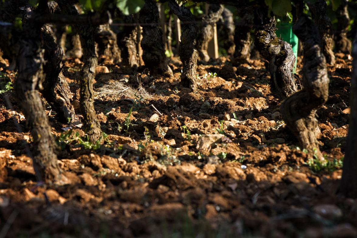 La viticulture Denis Mortet