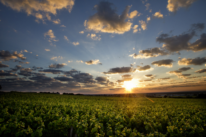 Les millésimes Bourgogne Denis mortet